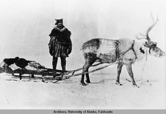 Reindeer_hitched_to_sled